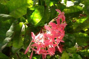 flowers blossom bloom petals flora flower