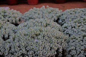 flowers blue flowers bunch of flowers floer bunch