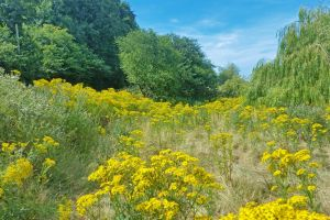 flowers weeping willow yellow flowers blue sky field of flowers summers day trees field