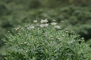 focus flower buds blur bloom nature plants flora depth of field blooming environment