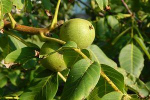 food fresh nature fruit color freshness red ripe gardening garden