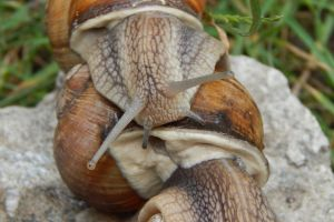 food helix garden healthy brown nature summer green natural escargot