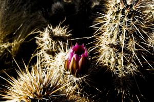 foothills beauty diamond in the rough tall grass pickers bloom red rock blossom dry grass mountains