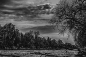 forest bank waters wild nature natural stream trees river landscape water black white idyllic