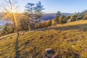 forest idyll trees trail mountain idyllic romantic evening shadow riedenburg