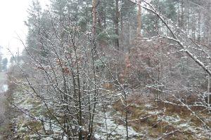 forest landscape natural nature aerial season color snow background flora