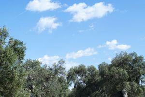 forrest blue sky cloud clouds