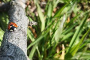fresh vegetable ladybug branch summer vibes morning sun green summer