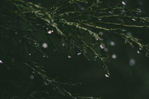 fresh waterdrops macro dewdrops droplets plant dawn purity garden drop