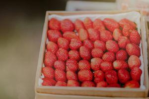 freshness food depth of field focus strawberries close-up blur fresh fruit tasty