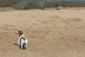 friends swim dogs ocean beach holiday animals nature man's best friend play