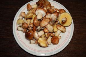 full mushrooms food picking healthy activity outdoor picker season country
