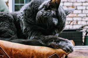 fur feline whiskers nose sleeping domestic cute animal pet close-up