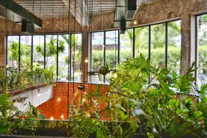 garden colour bulbs color lights urban daylight balcony plants lit
