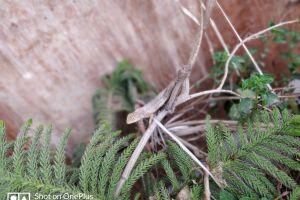 garden lizard nature houseplants