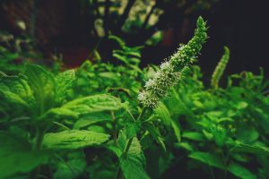garden orchid flower mother nature mint natural beautiful flowers white blossom green
