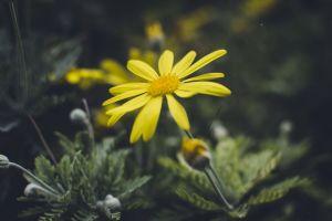 golden flower nature flower grass natural yellow green