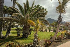 grass coast palms sunny