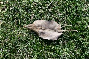grass field blade of grass grass land dried leaf dry grass grass