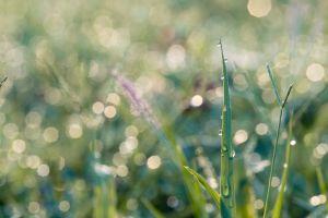 grass green dew blade of grass wet lawn macro plant