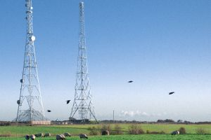 grass tower energy transmission sheep satellite dish