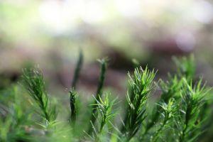 green moss light sun spruce macro weeds forest