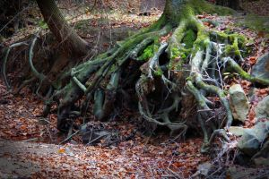 green rocks tree roots stone nature