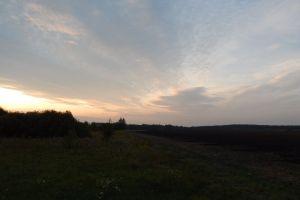 green sun sunlight road sunset summer tree sky background field