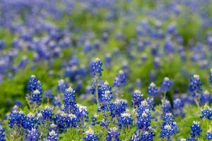growth bright garden field close-up beautiful color blur grass flora