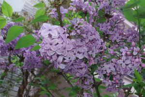 hd wallpaper beautiful flowers flowers garden