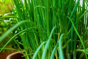 herbs close summer plant nutrition nature chives herb garden food garden