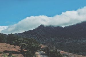 high nature trees wood natural forest valley mountain top cloudy sky environment