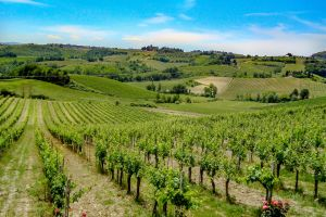 hillside country hill farm wine grapevine winery field farmland pasture