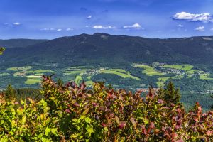 idyllic forest bavarian forest mountain range meadow nature mountain blueberry away in the free
