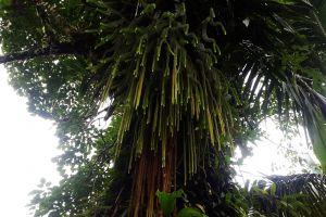 jungle tropical tree rainforest
