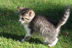 kittens friendly pets soft playful furry adorable fur cats whiskers
