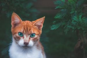 kitty animal tabby feline adorable cat cute