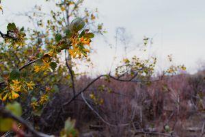 landscape daylight bright garden branch flowers growth summer environment color