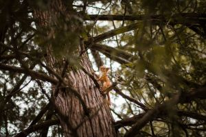 landscape environment daytime tree squirrel nature branches animal close-up wildlife