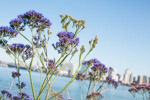 landscape lavender (flower) bright color daylight close-up flora blur flowers sunny