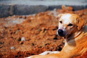 landscape mammal purebred dog fur park daylight animal photography rock portrait