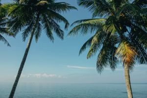 landscape palm leaves daytime sky clouds scenic palm trees seascape nature palm