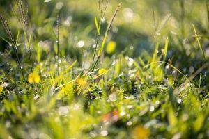 lawn dew grass green wet