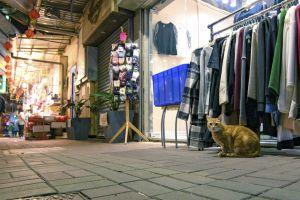 low angle shot clothes market looking village street noght hong kong cat bricks