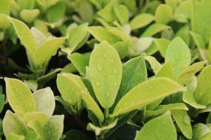 macro green nature greenery plant vegetation macro photography leafs