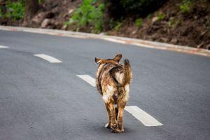mammal street dog road daylight