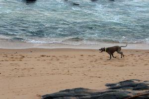 man's best friend beach animals friends ocean nature holiday pet dog dogs