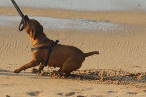 man's best friend swim friends beach animals dogs holiday ocean play nature