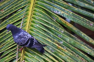 minimalism dove palm tree palm animal feathers wings