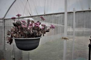 minimalist plants flower garden houseplants garden